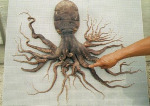 Oktopus mit 96 Tentakeln