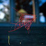 Repariertes Spinnennetz von Nina Katchadourian