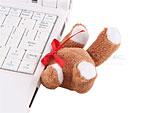 Enthaupteter USB-Teddy-Bär